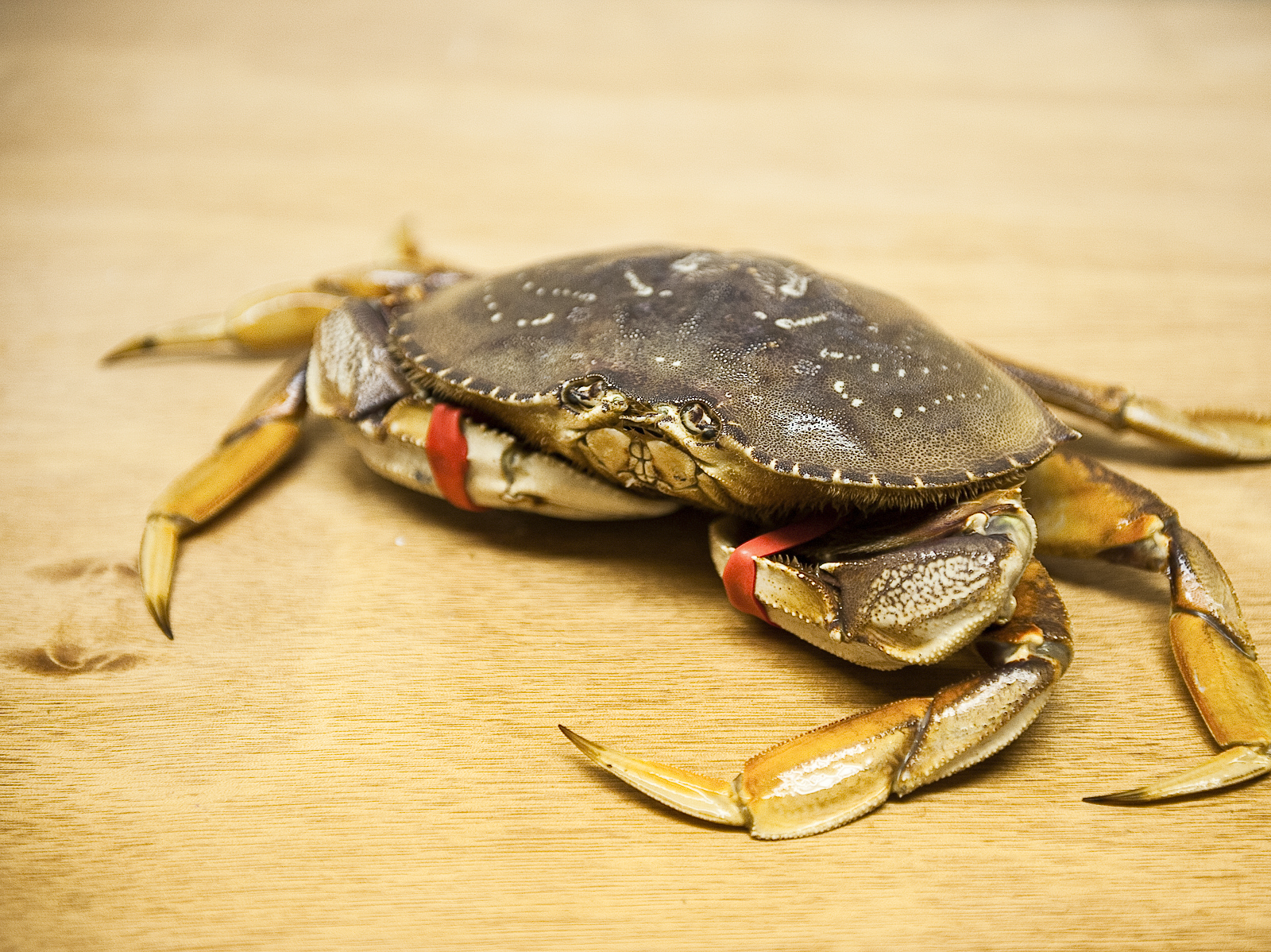 Dining al fresco from the bay to your bucket oregon for Crab fishing oregon